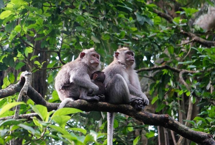 Những cá thể khỉ trong khu bảo tồn